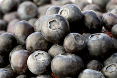 Blueberries. Close-up of healthy fresh blueberries Stock Images