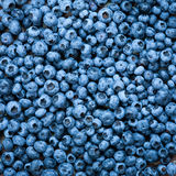 Blueberries close up Stock Photography