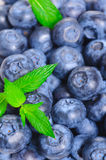 Blueberries Close up. With a sprig of mint Stock Photography