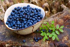 Blueberries closeup Stock Image