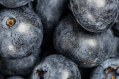 Blueberries closeup macro Royalty Free Stock Photo