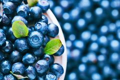 Blueberries closeup Royalty Free Stock Photography