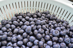 Washed blueberries in colander Royalty Free Stock Image