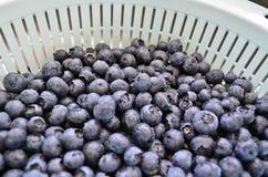 Fresh blueberries in colander. Freshly picked washed blueberries in colander in the sink Royalty Free Stock Image