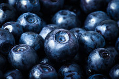 Blueberries collected manually. background Royalty Free Stock Photos