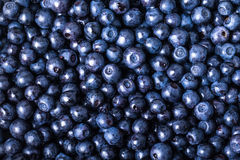 Blueberries collected manually. background Stock Image