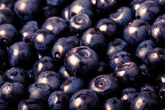Blueberries collected manually. background.Tinted Royalty Free Stock Images