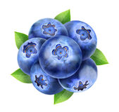 Blueberries composition Stock Image