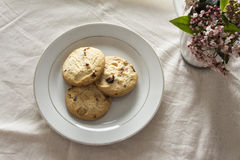 Blueberries cookies on a white plate Royalty Free Stock Images