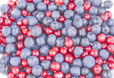 Blueberries and cowberries cranberry. Blueberries and cranberries cowberries on the white background Stock Images