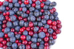 Blueberries and cowberries cranberry Royalty Free Stock Image