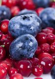 Blueberries and cranberries. Blueberries are a group of flowering plants in the genus Vaccinium, sect. Cyanococcus. The species are native to North America and Royalty Free Stock Photo
