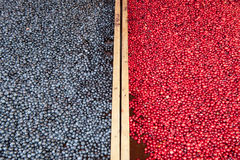 Blueberries and Cranberries Stock Images