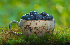 Blueberries in a cup Stock Photo