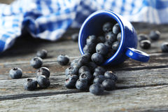 Blueberries in cup on blue wooden background. Royalty Free Stock Image