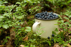 Blueberries in a Cup Royalty Free Stock Photos