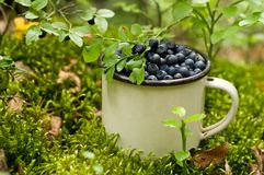 Blueberries in a Cup Royalty Free Stock Photography