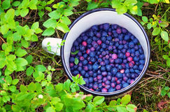 Blueberries in the cup. Royalty Free Stock Photography