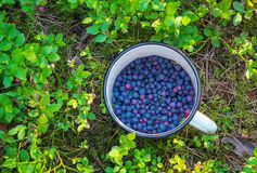 Blueberries in the cup. Stock Images