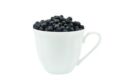 Blueberries in a cup Royalty Free Stock Photo