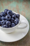 Blueberries in a cup Stock Photography