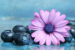 Blueberries and daisy Royalty Free Stock Photos
