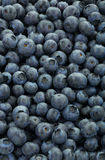 Blueberries depicted from above with backlight. Royalty Free Stock Images