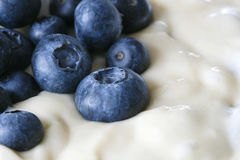 Blueberries in dough. Close-up of fresh blueberries in dough soon to be pie or cake Stock Photography