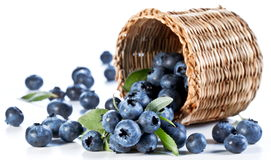 Blueberries fall of the basket. Stock Photos