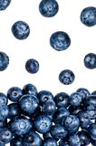 Blueberries falling on a pile of other blueberries. Front shot of a pile of blueberries and some more falling from above Stock Photo