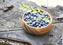 Blueberries in the Forest Summer Light Stock Image