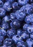 blueberries fresh Στοκ εικόνα με δικαίωμα ελεύθερης χρήσης