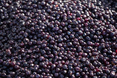 Blueberries. fresh berry royalty free stock image