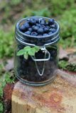 Blueberries. Fresh blueberries in a jar Royalty Free Stock Images