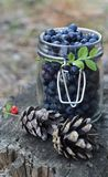 Blueberries. Fresh blueberries in a jar Stock Photo