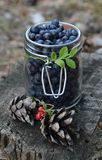 Blueberries. Fresh blueberries in a jar Royalty Free Stock Photos
