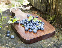 Blueberries Freshly Picked from the Forest Stock Photos