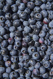 Fresh Wild Blueberries Royalty Free Stock Photo