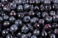 Blueberries fruit close up Royalty Free Stock Photography