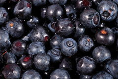 Blueberries fruit close up Royalty Free Stock Images