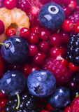 Blueberries with fruits. Blueberries are a group of flowering plants in the genus Vaccinium, sect. Cyanococcus. The species are native to North America and Stock Image