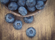 Blueberries in garden Royalty Free Stock Photography