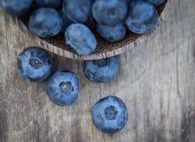 Blueberries in garden Stock Photography