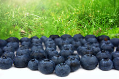 Blueberries in garden. selective Focus Royalty Free Stock Photography