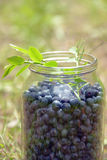 Blueberries in a glass bank Stock Image