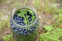 Blueberries in a glass bank Royalty Free Stock Photo