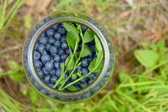 Blueberries in a glass bank Stock Photography