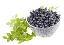 Blueberries in a glass bowl Stock Photography