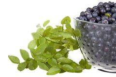 Blueberries in a glass bowl Stock Photo