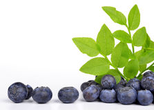 Blueberries with green leaf Stock Images